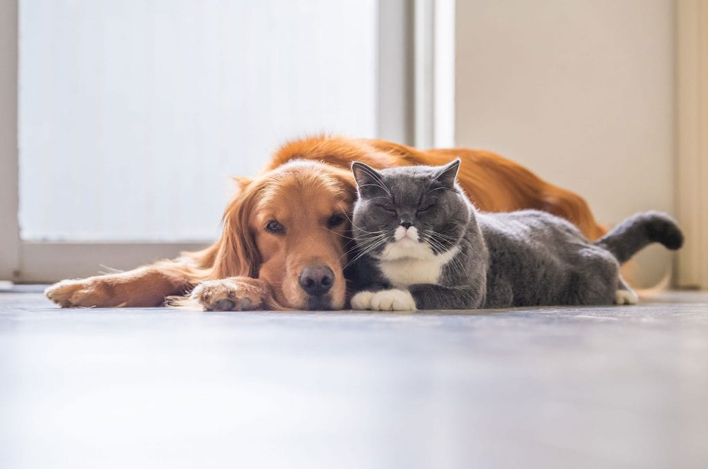 Take care of your dog and cat